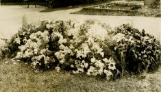 Flowers on Ada Ross's grave [July 18, 1918]