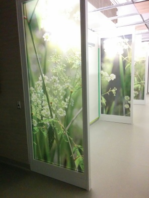 Construction of new HSC Women's Hospital, Wildflower theme is represented throughout the, 2018. HSC Communications